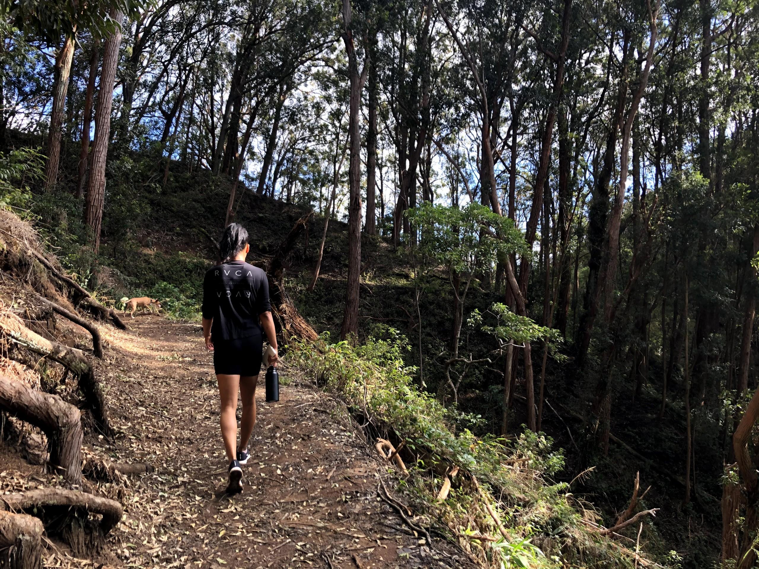 Aiea Loop Trail Katie Kenny