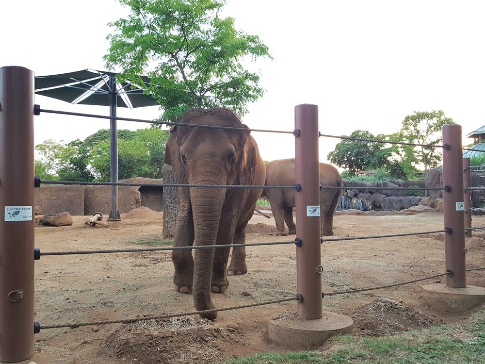Elephants at the Honolulu Zoo