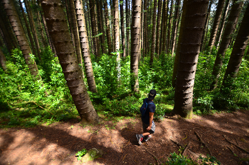 Hike Of The Month Judd Trail Cook Pines