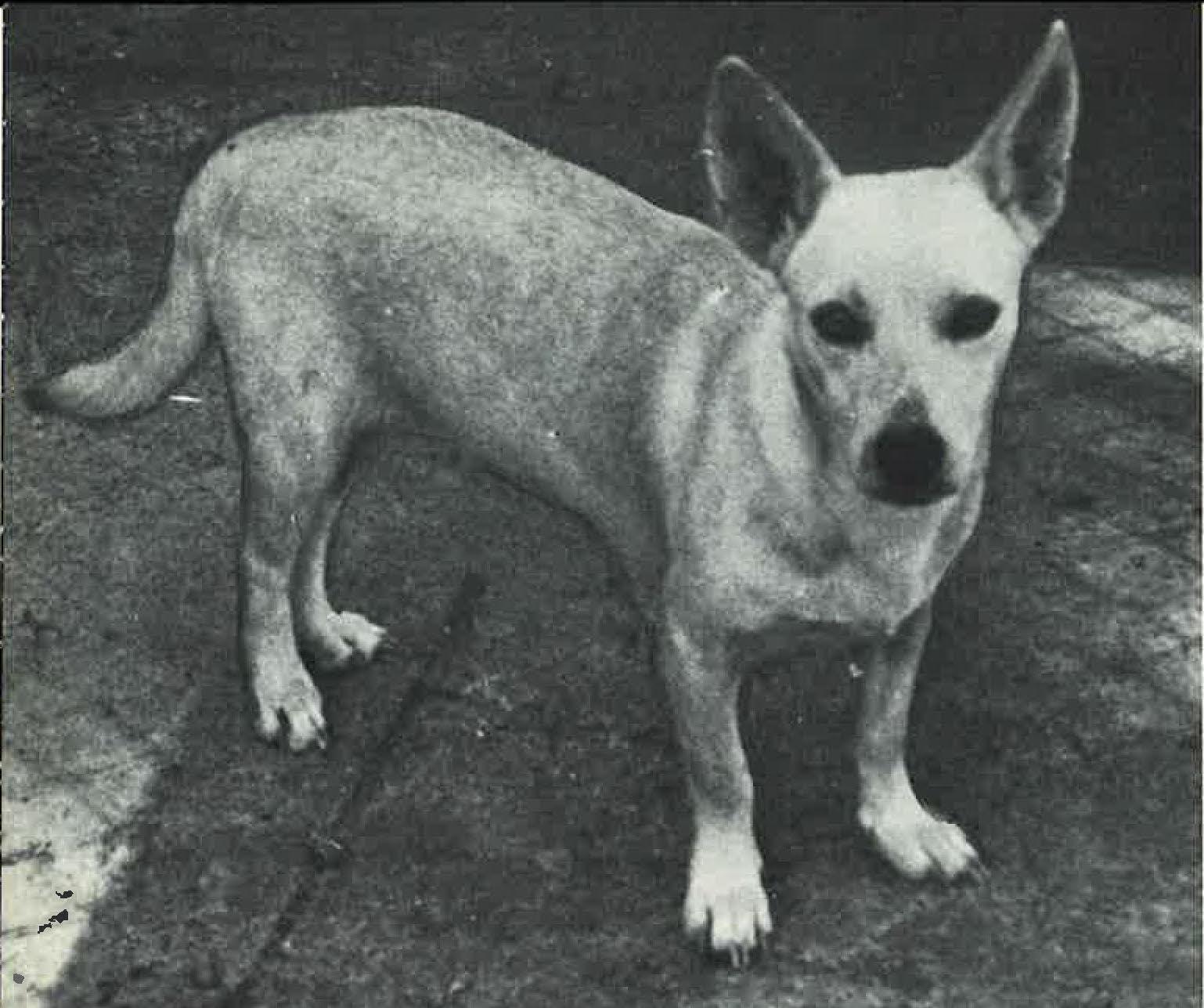 Hawaiian Poi Dog 1970 Page 1