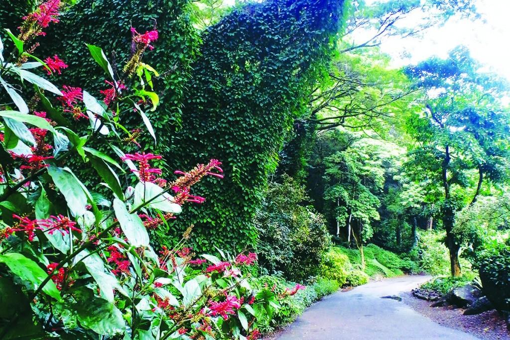 Oahu Waimea Pathways