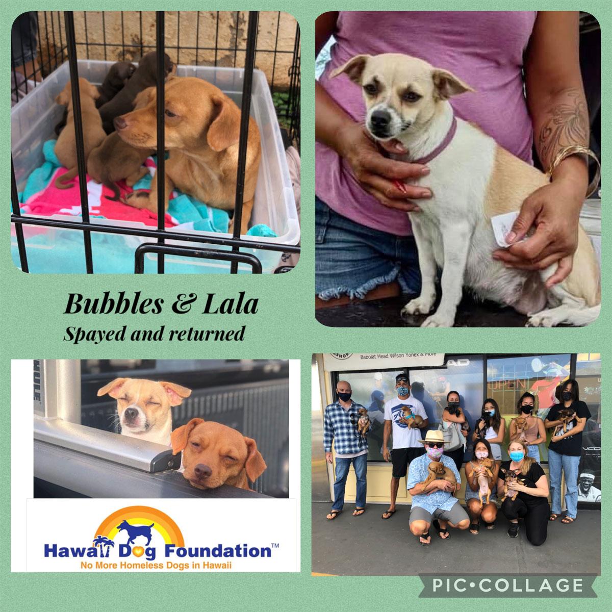 Hawaii Dog Foundation 1200