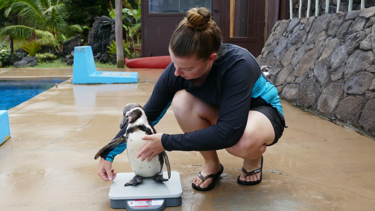 Sea Life Park Penguin