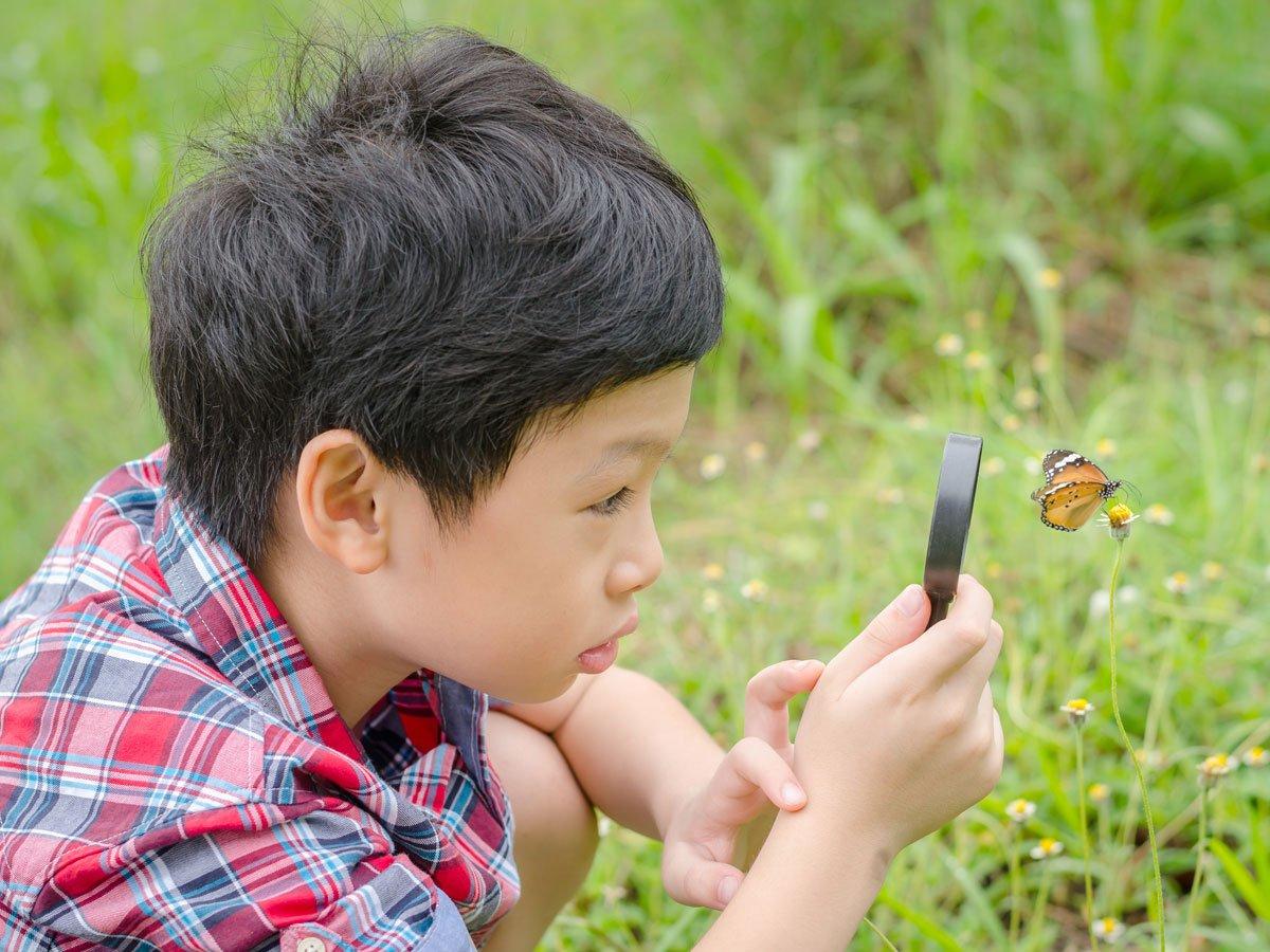 Butterfly Garden Photo Ward 1200