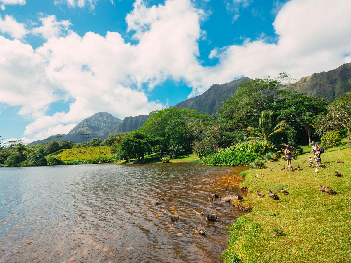 Ho'omaluhia Botanical Garden Lake Aaron Yoshino