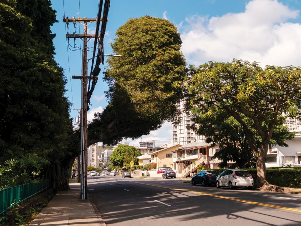 Hn2102 Ay Trees Wilder St Banyan 1656 2 Web