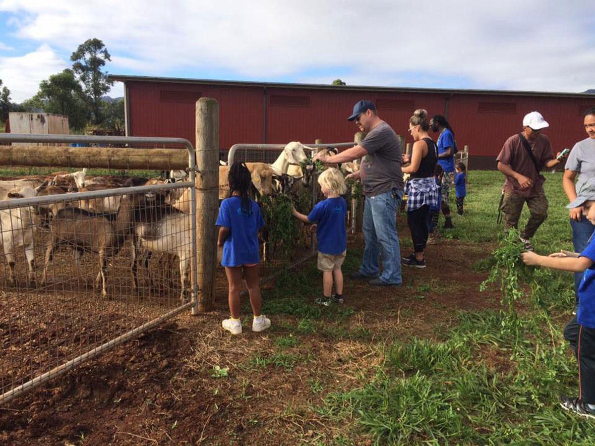 Goats Wideshot Courtesy Sweet Land Farms 1200