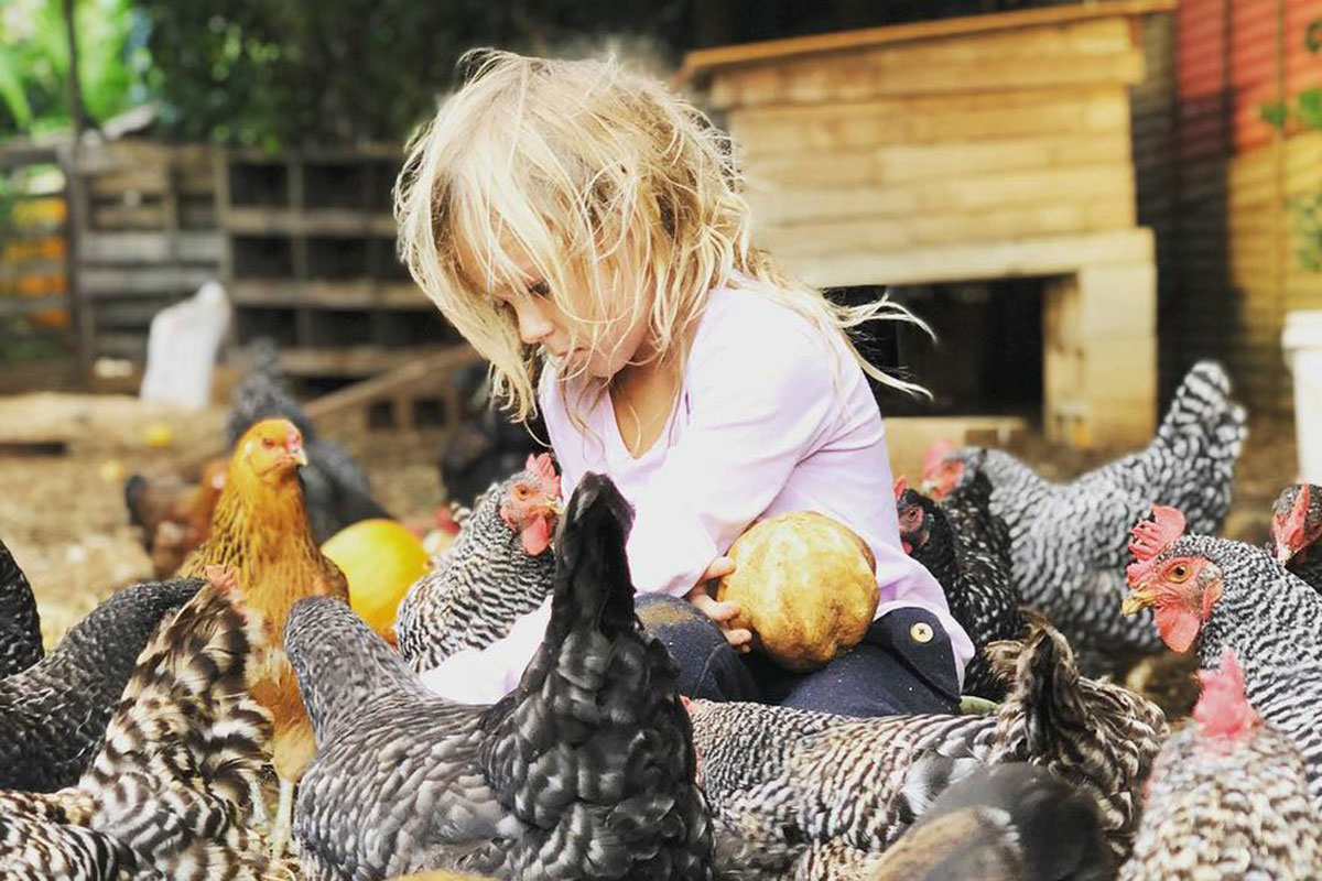 Keiki And Plow Chickens Courtesy Keiki And Plow 1200