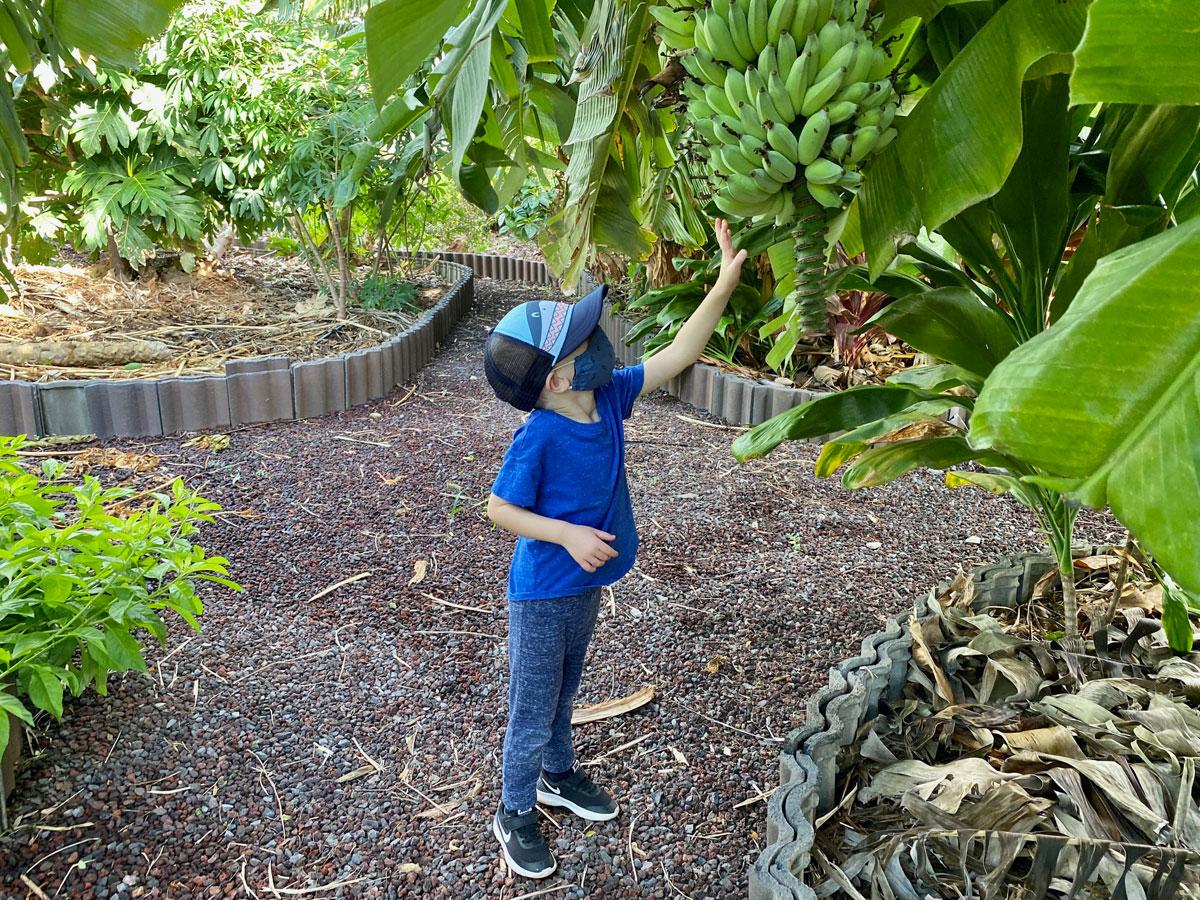 Surfrider Foundation Garden Bananas Photo Laura Dornbush