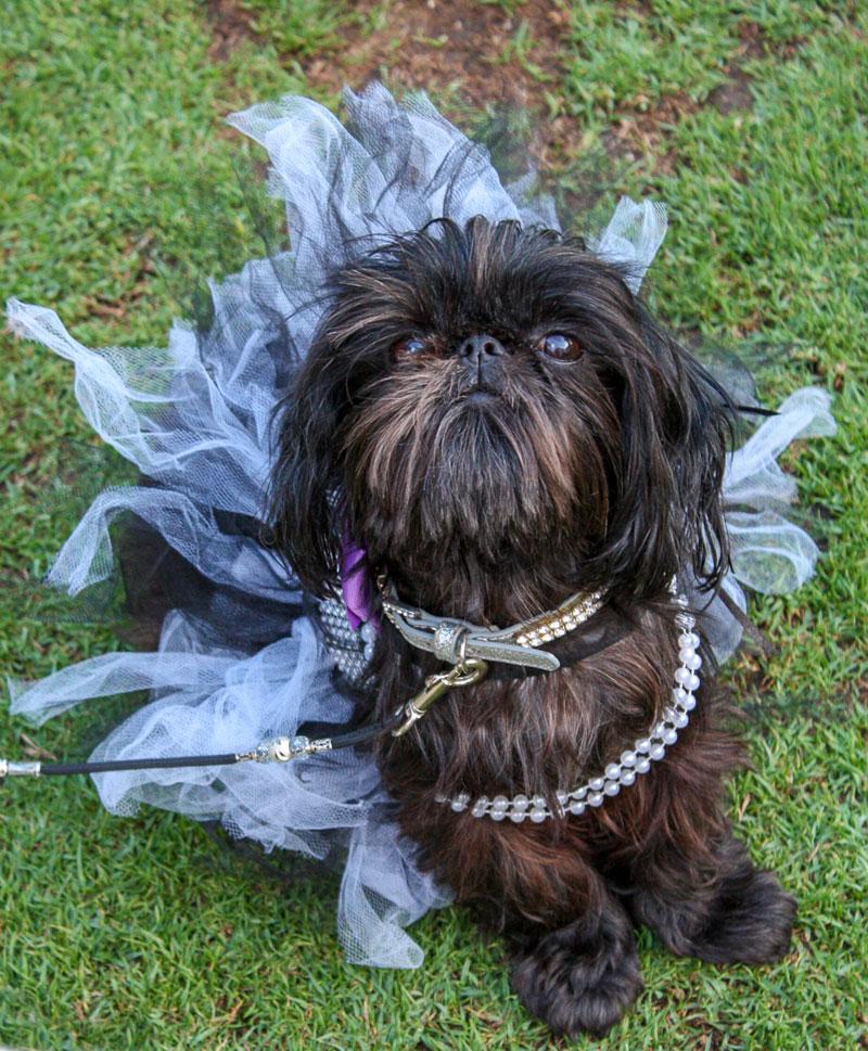 Dog dressed up in a tutu