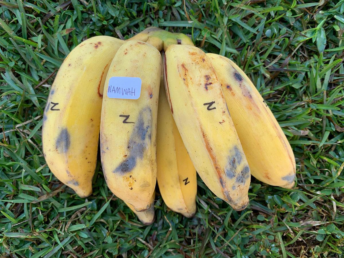 Banana Source Namwah Photo Christi Young