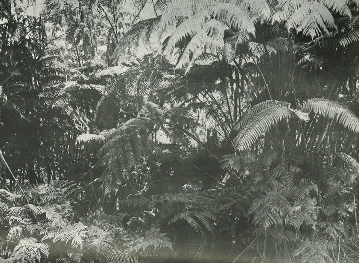 Hawaii Volcano National Park Ferns Paradise Of The Pacific July 1921