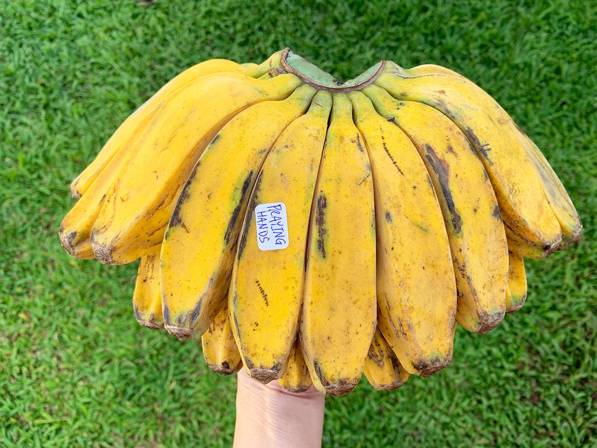 Banana Source Box Praying Hands Photo Christi Young