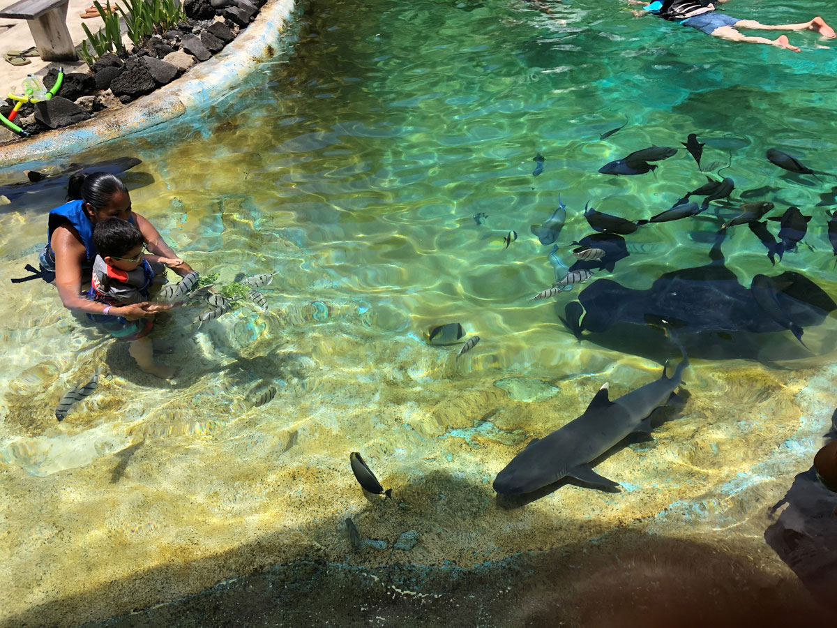 Sea Life Park Reef Encounter Courtesy Sea Life Park