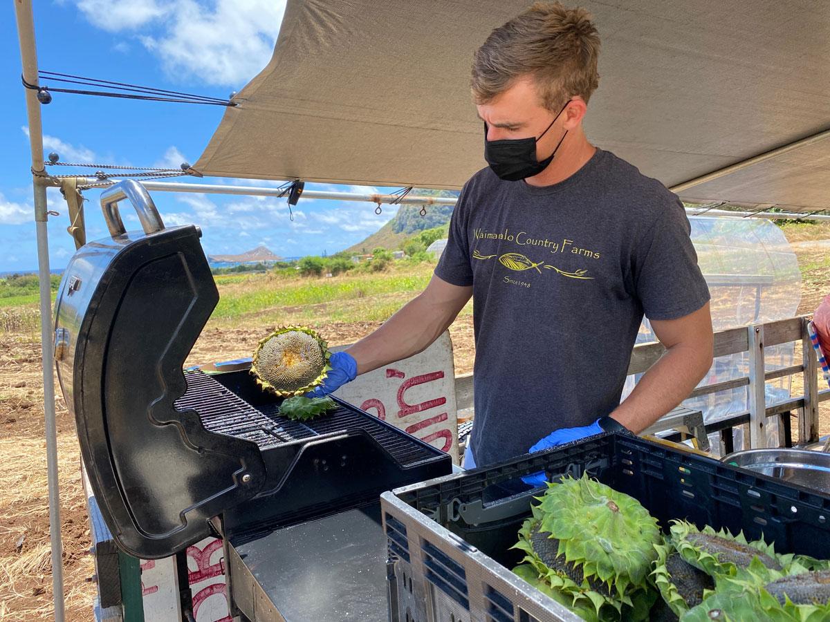 Waimanalo Country Farms Sunflowers Grilled Sunflower Heads Photo Laura Dornbush