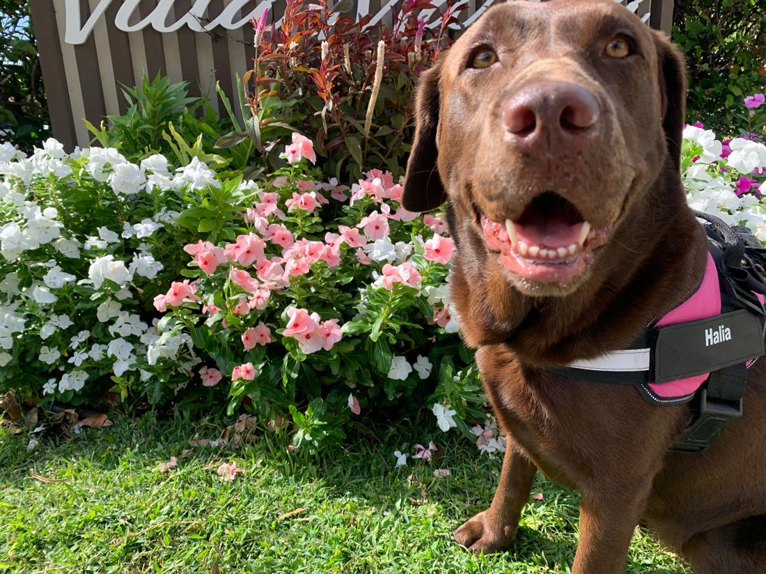 2021 Pet Photo Contest Third Namie Sato Halia