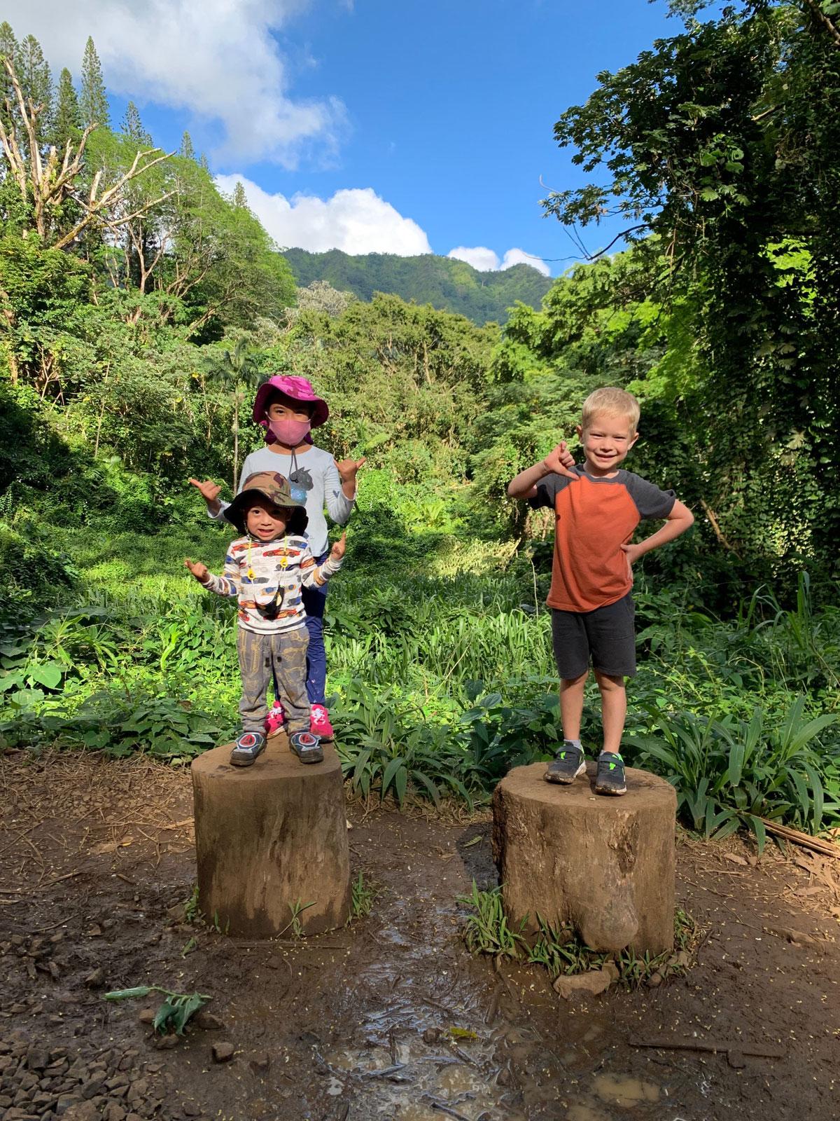 Manoa Falls Trail Kids On Stumps Photo Laura Dornbush