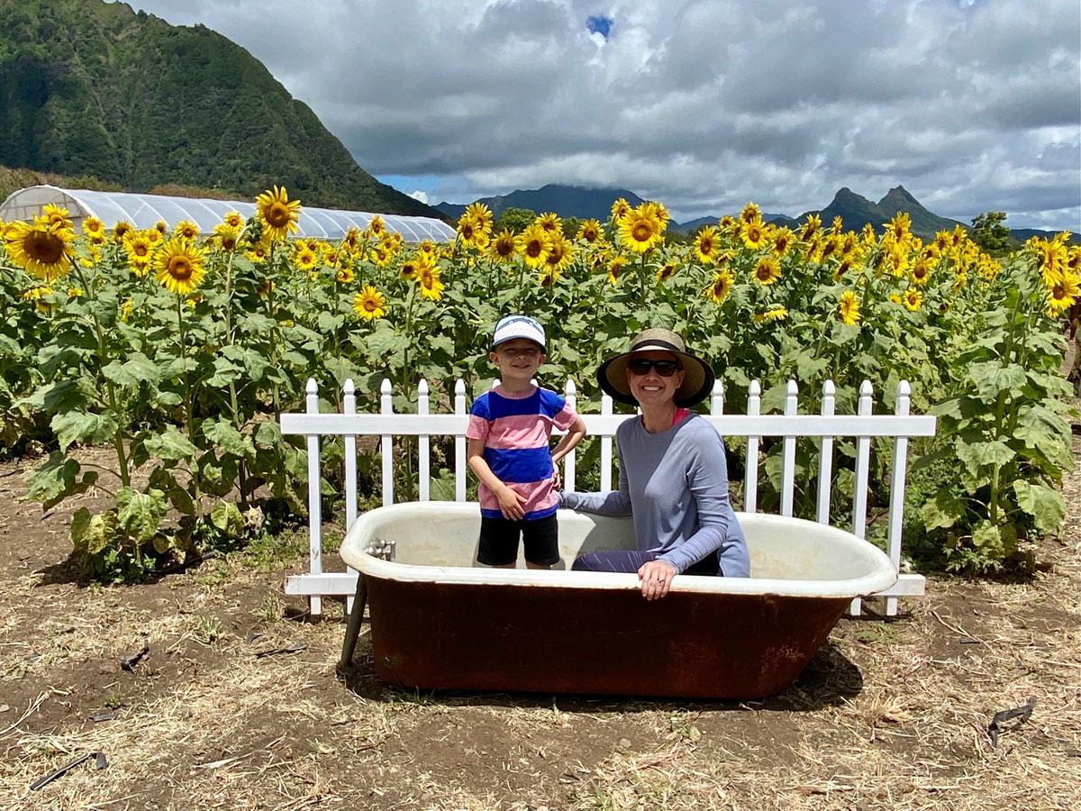 Waimanalo Country Farms Sunflowers Bathtub Photo Laura Dornbush