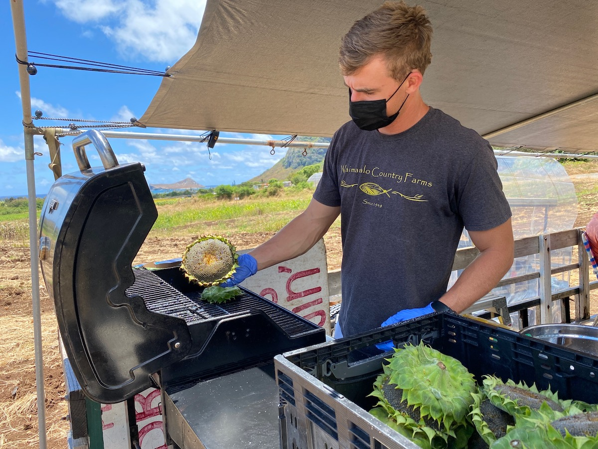 Waimanalo Country Farms Sunflower Grill Master Laura Dornbush