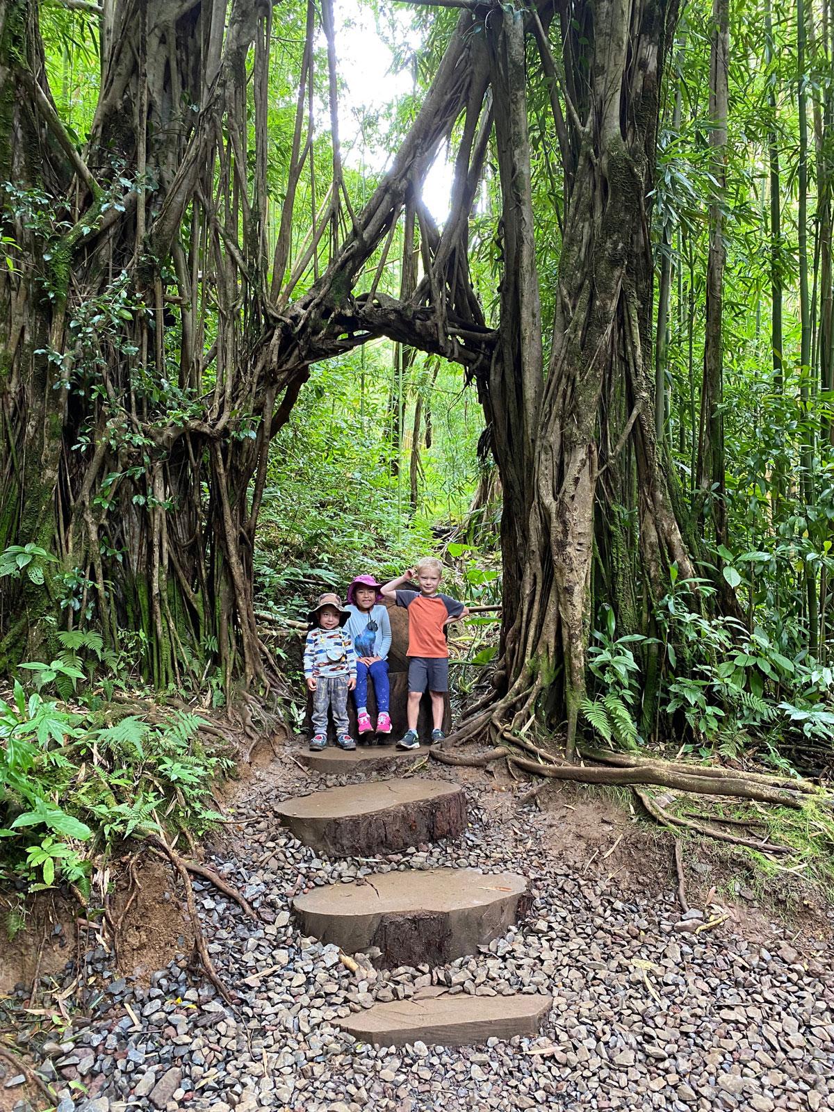 Manoa Falls Trail Tree Frame Photo Laura Dornbush