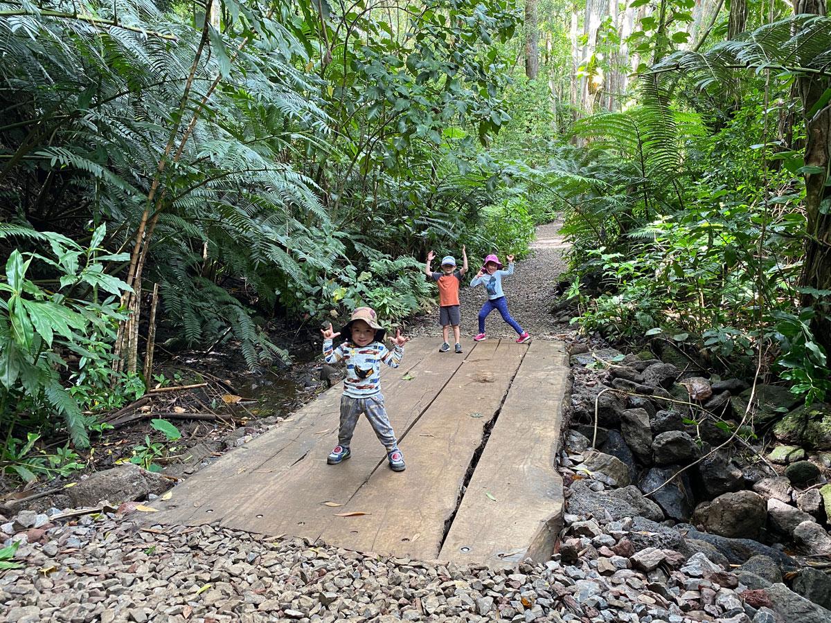 Manoa Falls Trail New Bridge Photo Laura Dornbush