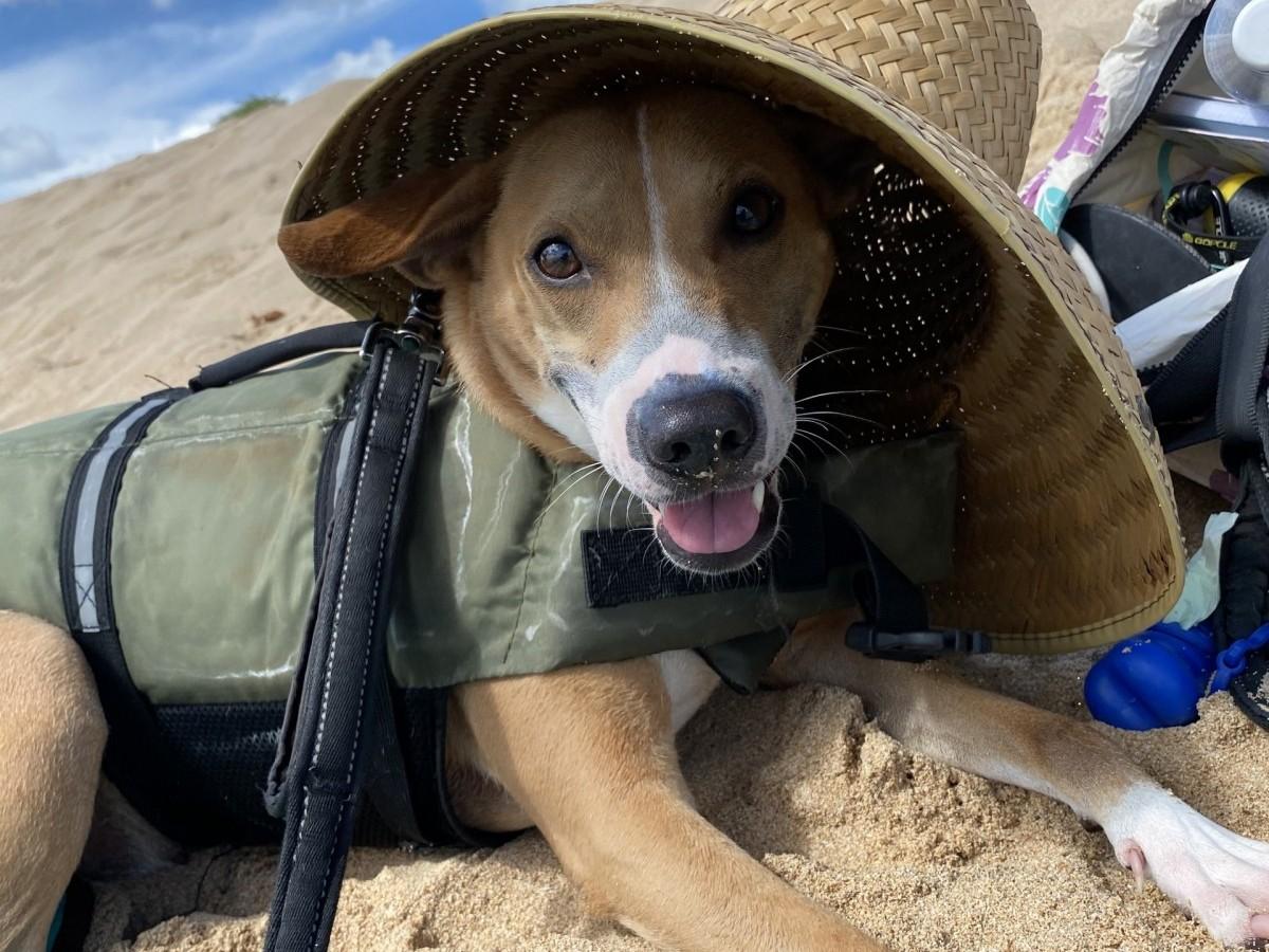 Dog on the beach with a shady hat
